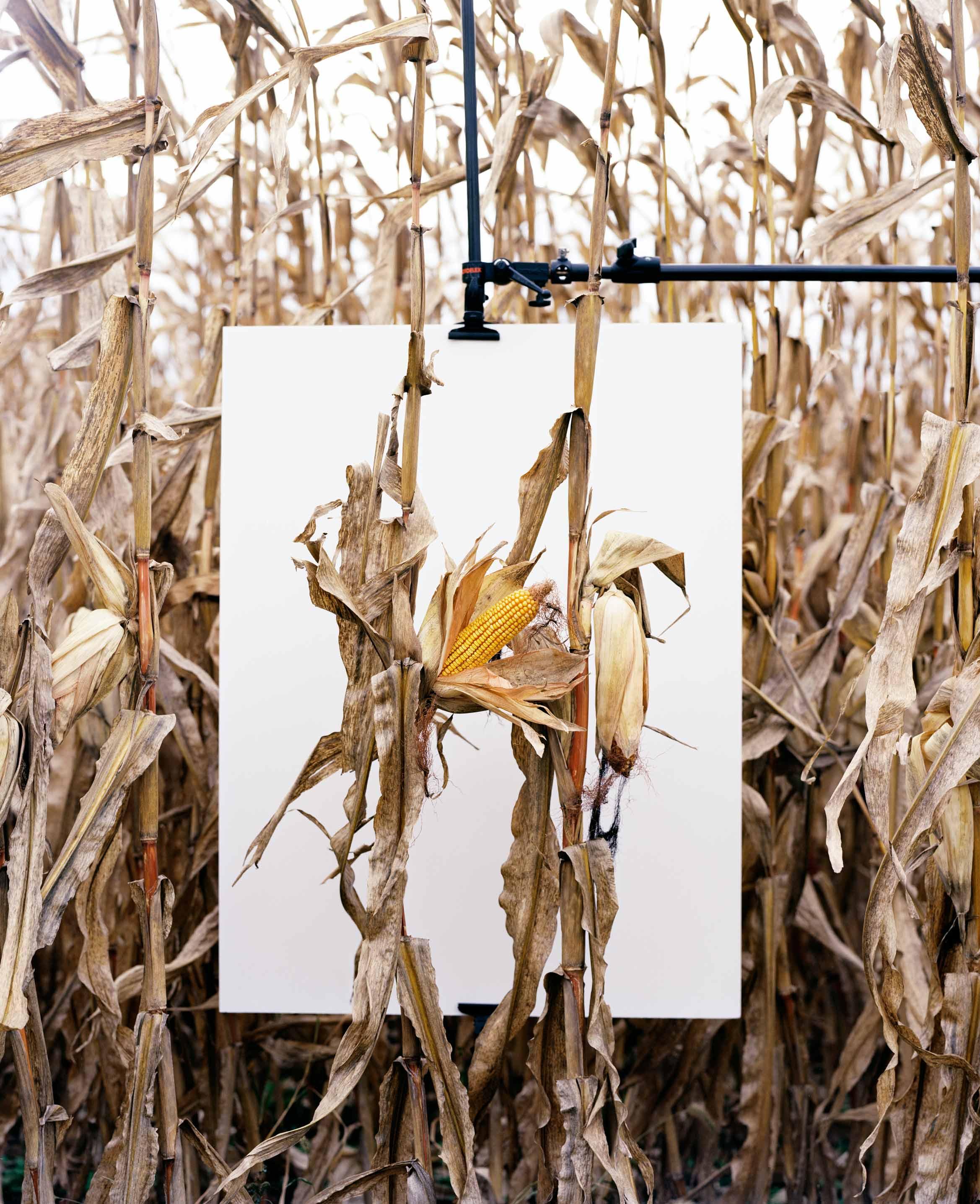 """Mathieu Asselin dévoilera cet été son enquête photographique sur la firme Monsento. """"Van Buren, Indiana"""", 2013. Avec l'aimable autorisation de l'artiste."""