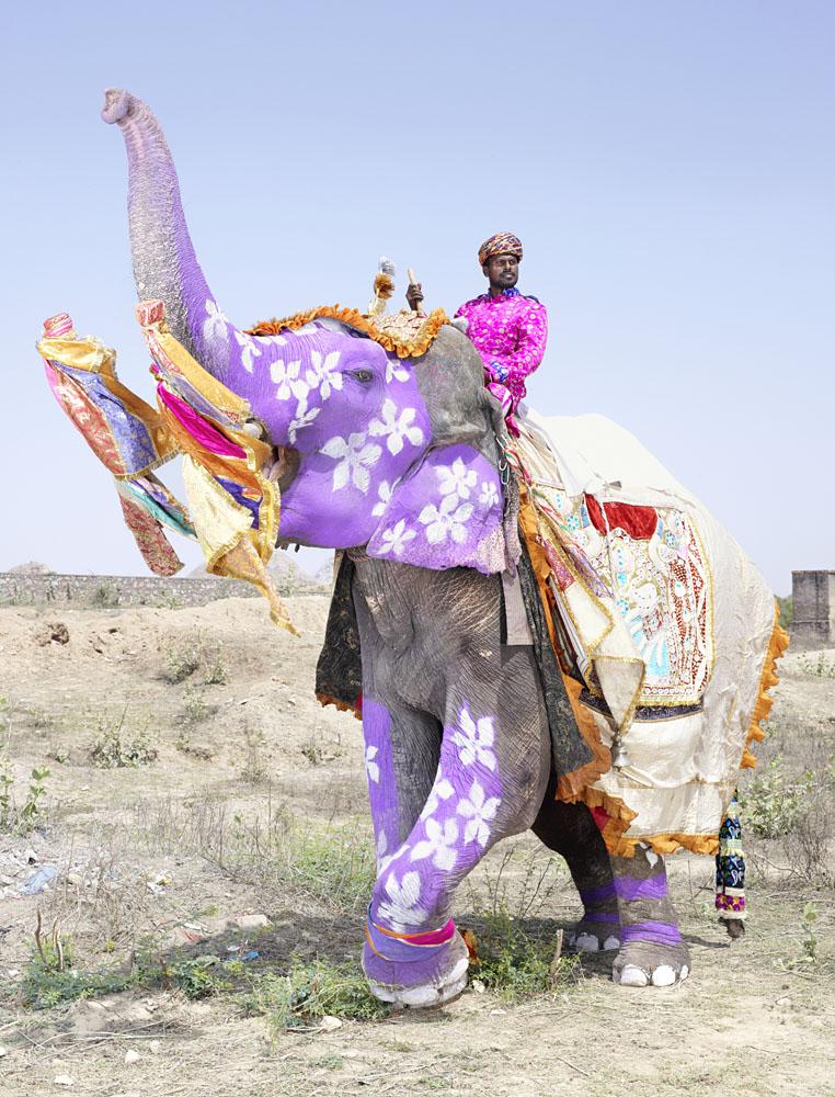 """Charles Fréger, de la série """"Painted Elephants"""" 2013."""