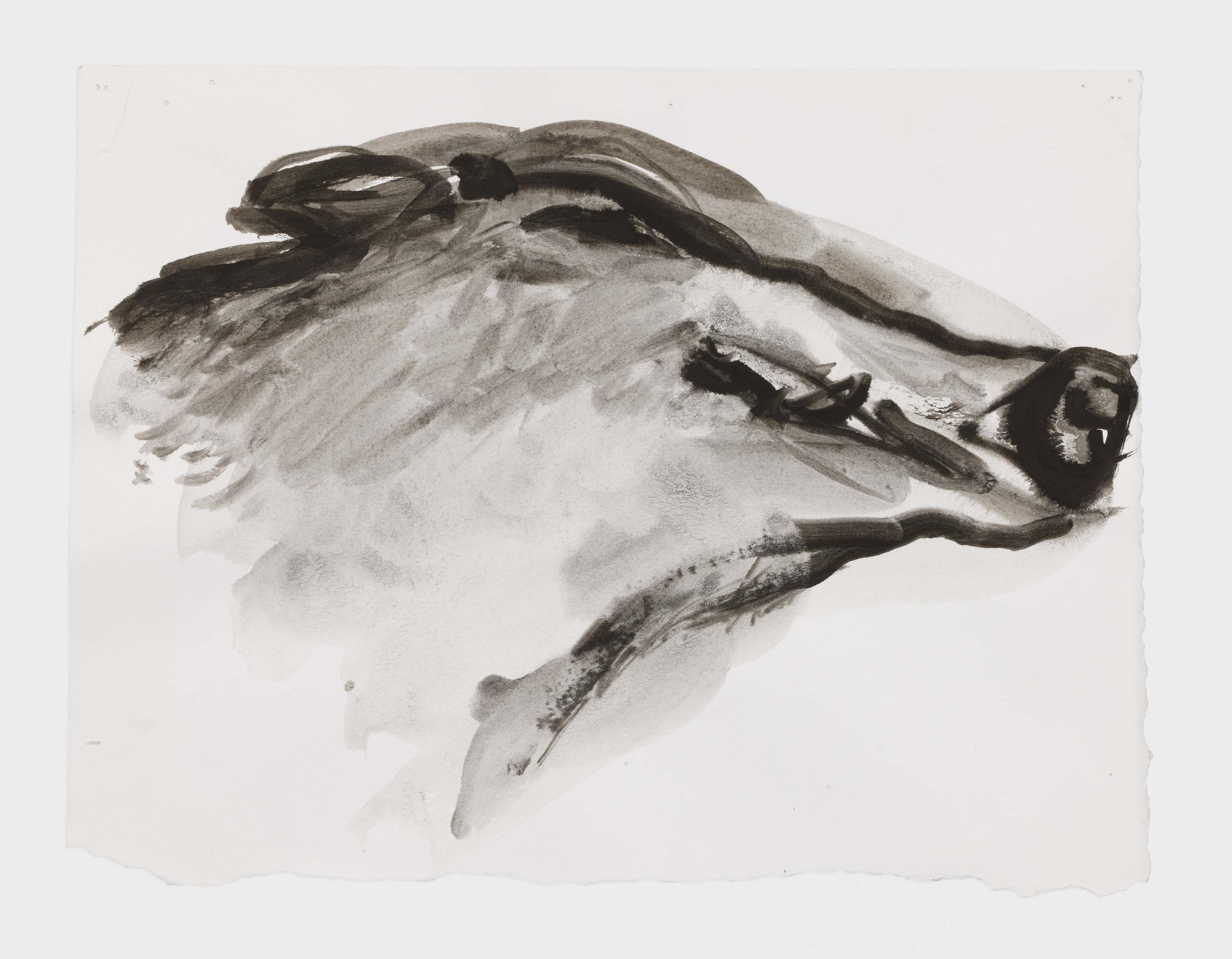 "Marlene Dumas, ""The boar smiles"", 2015-2016, Ink wash and metallic acrylic on paper 9 3/4 x 12 3/4 inches 24.8 x 32.4 cm. Exposition ""Myths & Mortals"", Galerie David Zwirner, New-York"