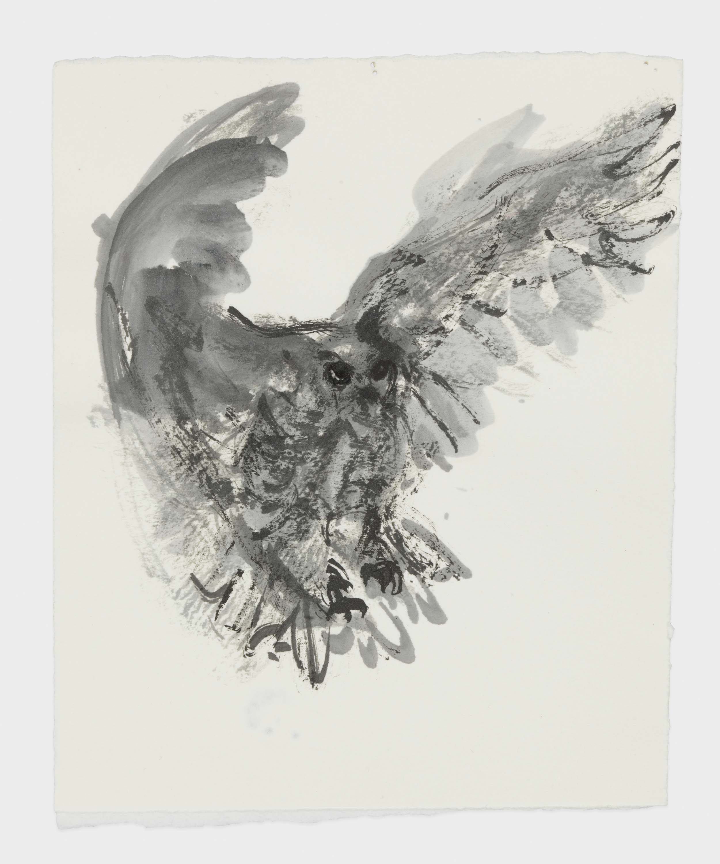 "Marlene Dumas, ""The owl"", 2015-2016, Ink wash and metallic acrylic on paper, 6 7/8 x 5 3/4 inches 17.5 x 14.6 cm. Exposition ""Myths & Mortals"", Galerie David Zwirner, New-York"