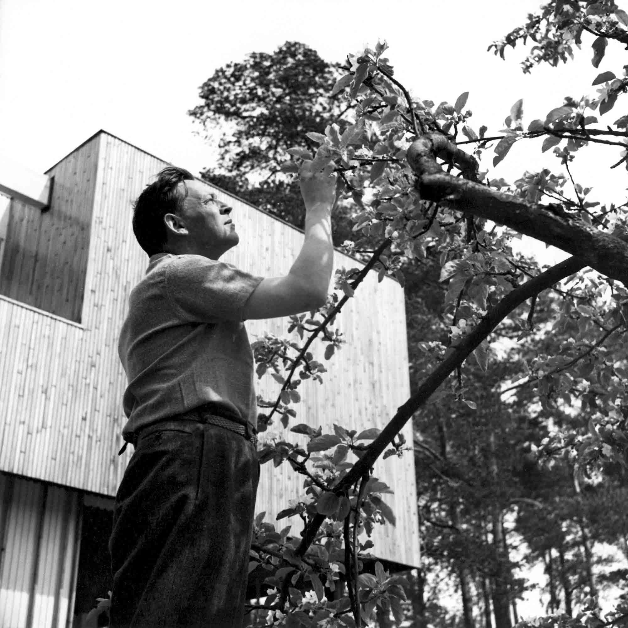 Alvar Aalto dans son jardin ©Alvar Aalto Museum