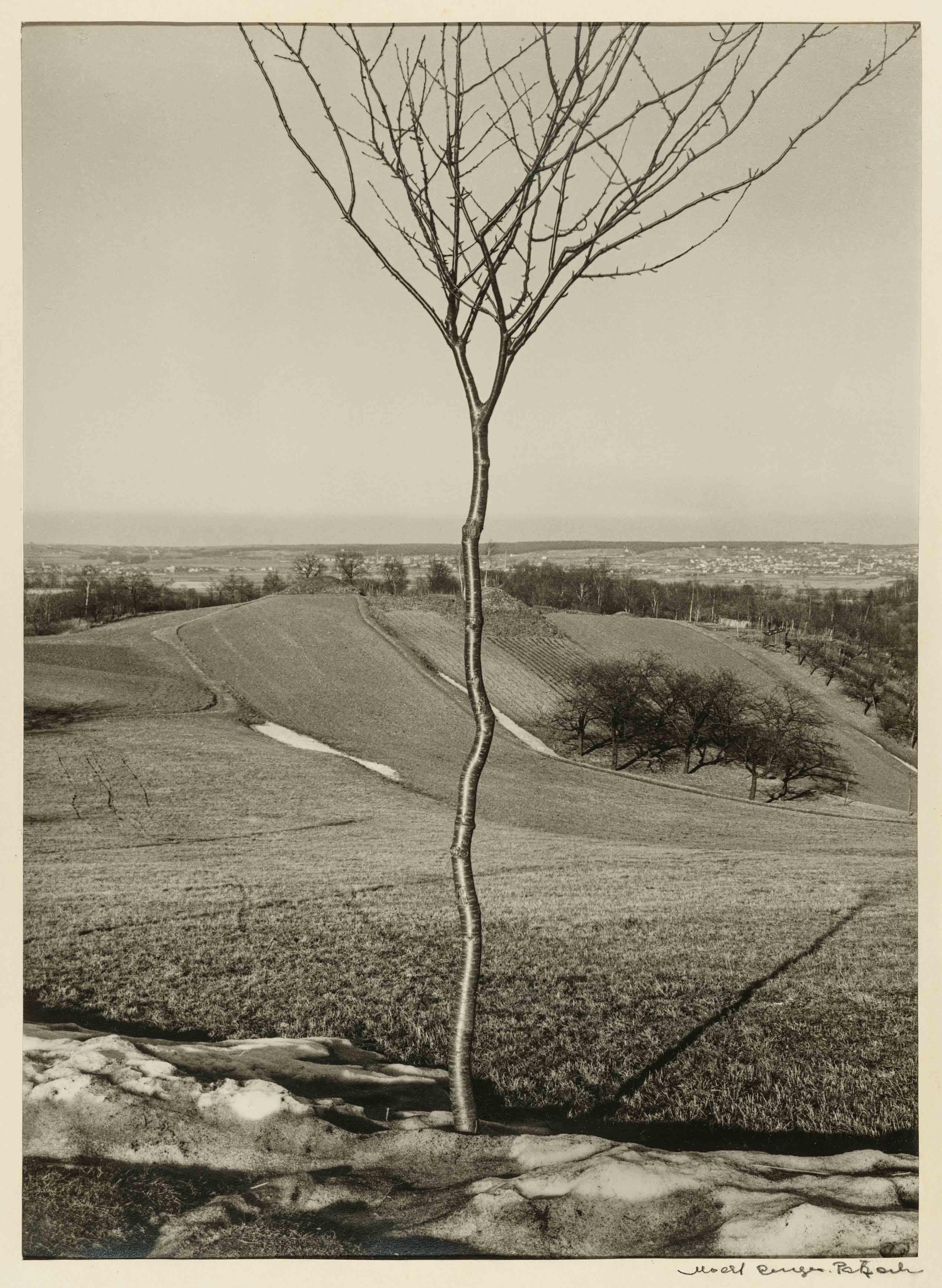 ALBERT RENGER-PATZSCH — Das Bäumchen [Le Jeune Arbre], 1928 Galerie Berinson, Berlin © Albert Renger-Patzsch / Archiv Ann und Jürgen Wilde, Zülpich / ADAGP, Paris 2017