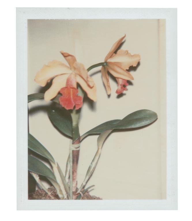 "Andy Warhol, "" Flowers"" (1983), impression Polaroid unique. Photo courtesy of Christie's Images LTD."