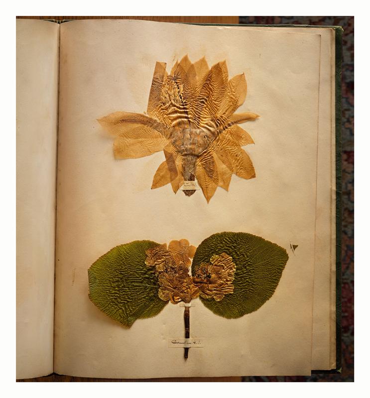 """Annie Leibovitz,""""Emily Dickinson's herbarium"""" (2010) © Annie Leibovitz. Courtesy the artist and Hauser & Wirth"""