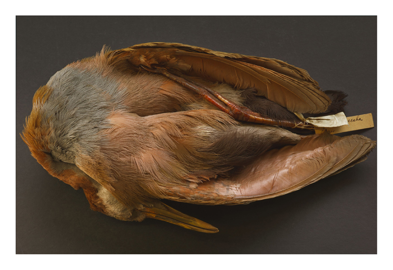 "Annie Leibovitz,""Charles Darwin's bird specimen, collected during the voyage of the Beagle"" (2010) © Annie Leibovitz. Courtesy the artist and Hauser & Wirth"