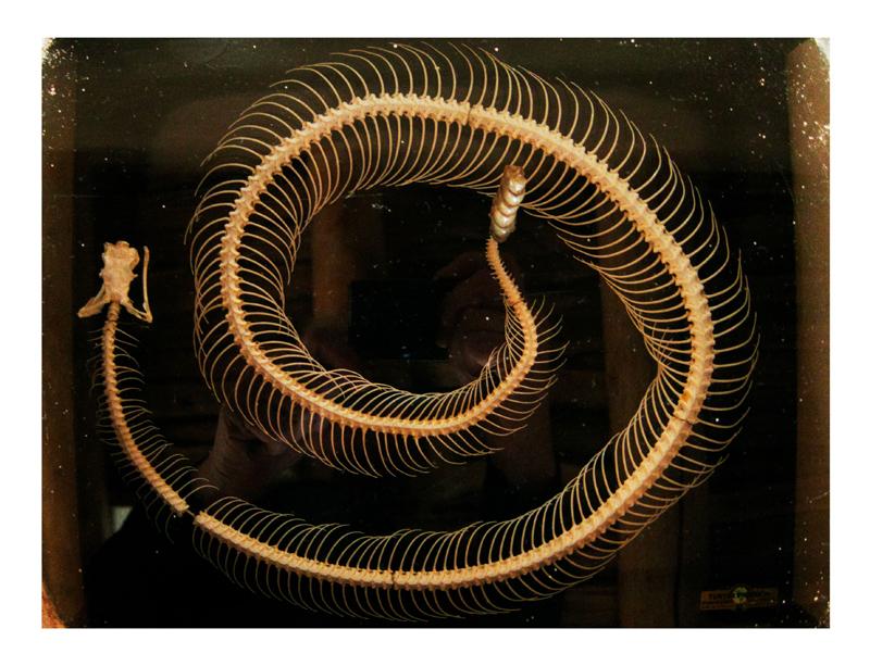 "Annie Leibovitz,"" Rattlesnake skeleton in Georgia O'Keeffe's living room"", Abiquiu (2010) © Annie Leibovitz. Courtesy the artist and Hauser & Wirth"