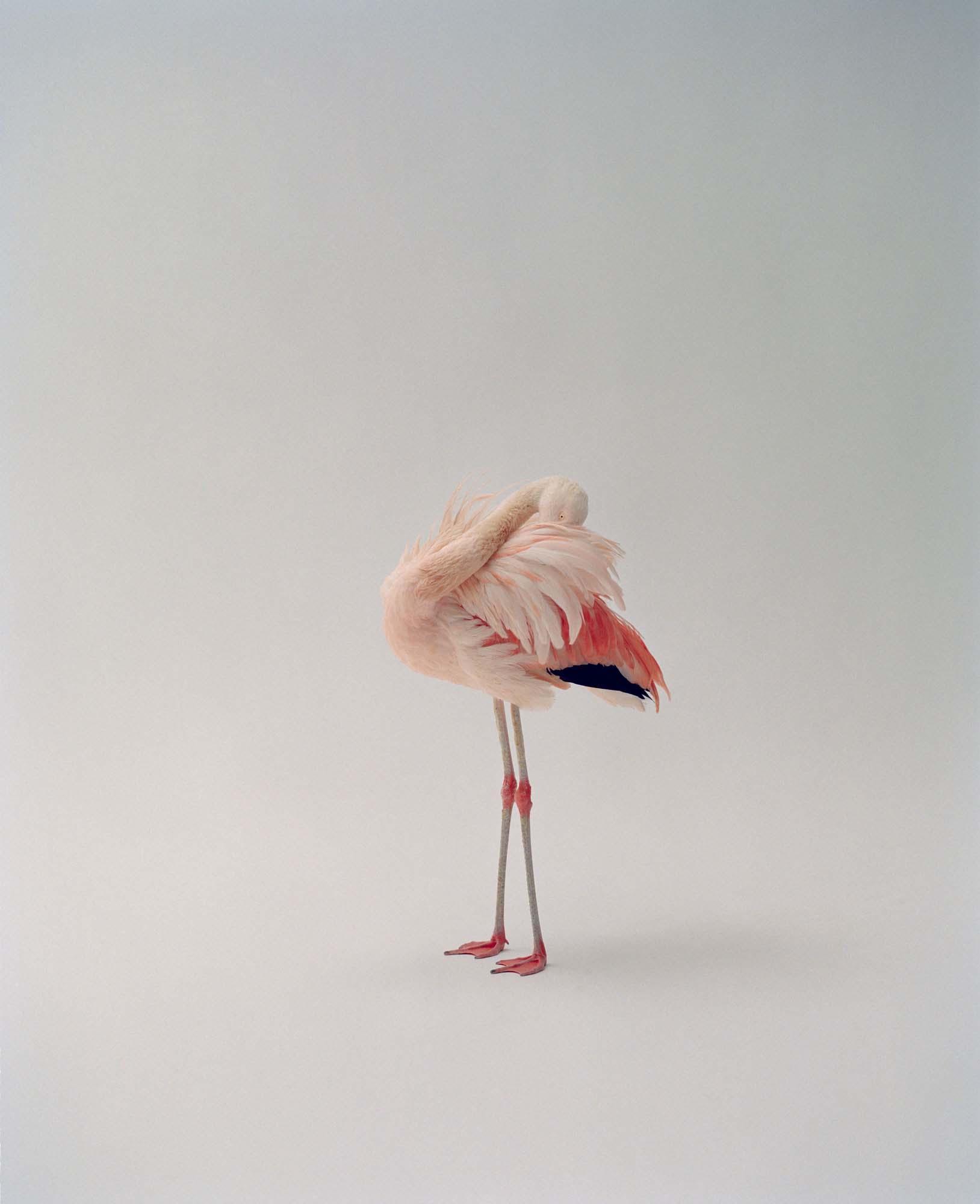 """Pinky #01"" par Dario Catellani. Courtesy of the Artist."