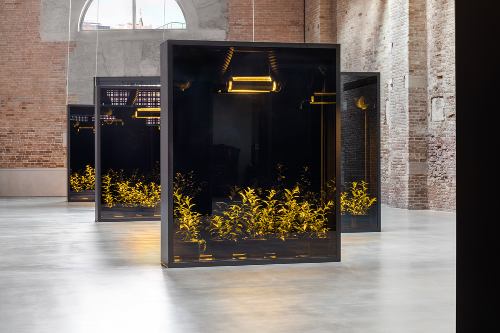 """Hicham Berrada, """"Mesk-Ellil"""" (2015-2019), courtesy of the artist and Kamel Mennour. Installation view """"Luogo e segni"""" at Punta della Dogana, 2019 © Palazzo Grassi, photography Delfino Sisto Legnani e Marco Cappelletti."""