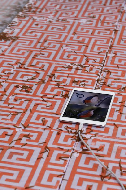 """Aude Pariset, """"Promession®: Young Adult Maze, Deciphering Level"""" (2018). Vue de l'exposition """"Futur, ancien, fugitif"""", Palais de Tokyo (16.10.19 – 05.01.20). Courtesy de l'artiste & Sandy Brown (Berlin). Crédit photo : Aurélien Mole"""