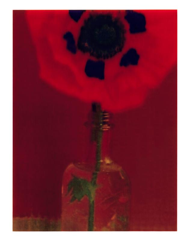 Le pavot, 1997 © Sarah Moon / Courtesy Armani/Silos
