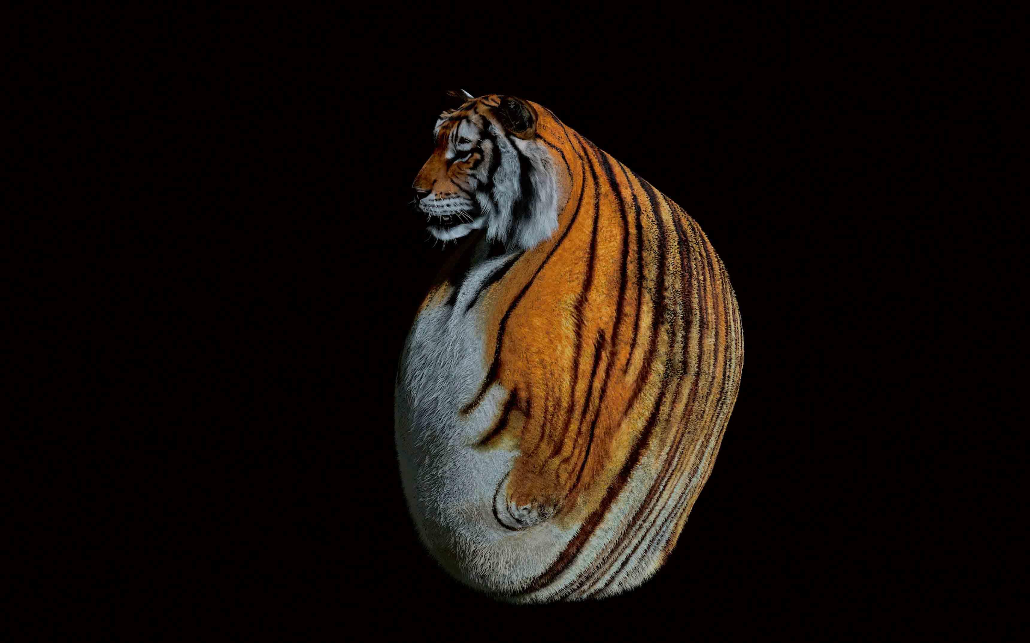 """2 or 3 tigers"", Tzu Nyen Ho, 2015"