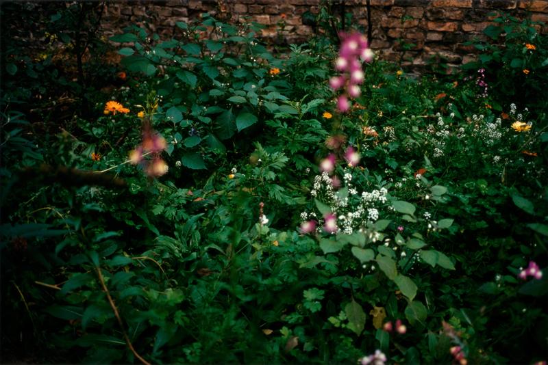 Wolfgang Tillmans, Garten, 2008, © the artist, courtesy Galerie Buchholz, Berlin/Cologne, Maureen Paley, London, David Zwirner, New York, Galerie Chantal Crousel, Paris