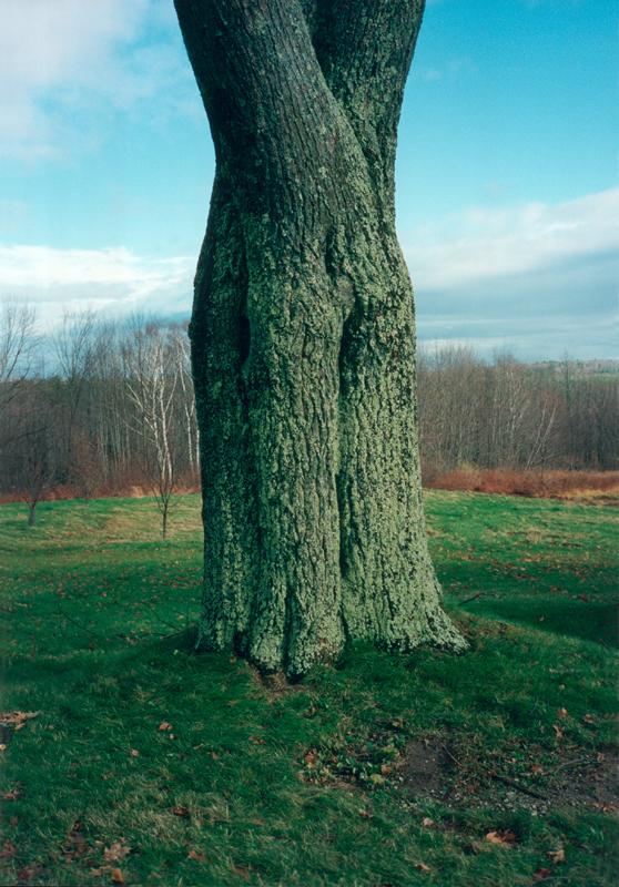 Wolfgang Tillmans, Shaker Tree, 1995, © the artist, courtesy Galerie Buchholz, Berlin/Cologne, Maureen Paley, London, David Zwirner, New York, Galerie Chantal Crousel, Paris