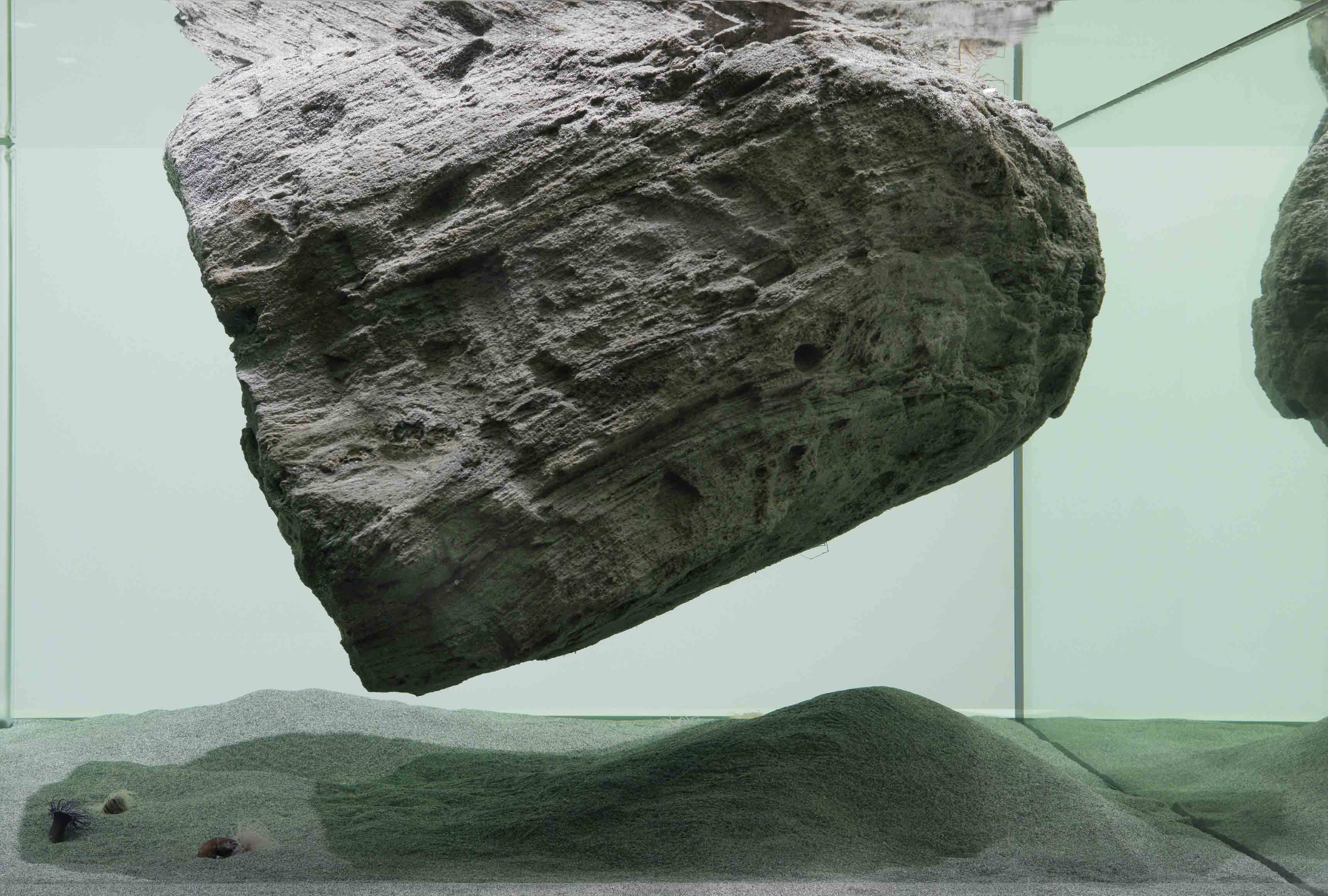 """""""Cambrian explosion"""", Pierre Huyghe (2014)"""