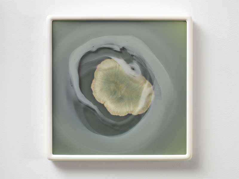 Dove Allouche Aspergillus versicolor 2016 R26 (MA) #21 2017. Photolithographie et cive enverre souffl. Photolithograph and hand-blown crown glass Encadr. Framed: 48 x 48 cm © Andr. Morin. Courtesy GB Agency.