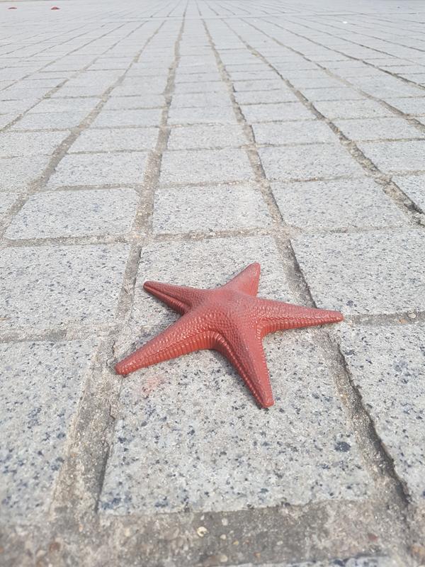 """l'une des 100 étoiles de mer de """"To Whom It May Concern"""" (2018), bronze, acier et patine, installé place Vendôme pendant la FIAC."""