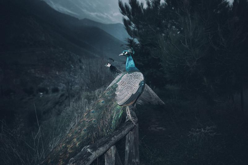 "Yorgos Yatromanolakis, ""The Splitting of the Chrysalis & the Slow Unfolding of the Wings"" © Yorgos Yatromanolakis"