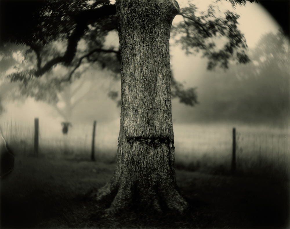 """UNTITLED (SCARRED TREE)"", SÉRIE DEEP SOUTH (1998). ÉPREUVE À LA GÉLATINE ARGENTIQUE."