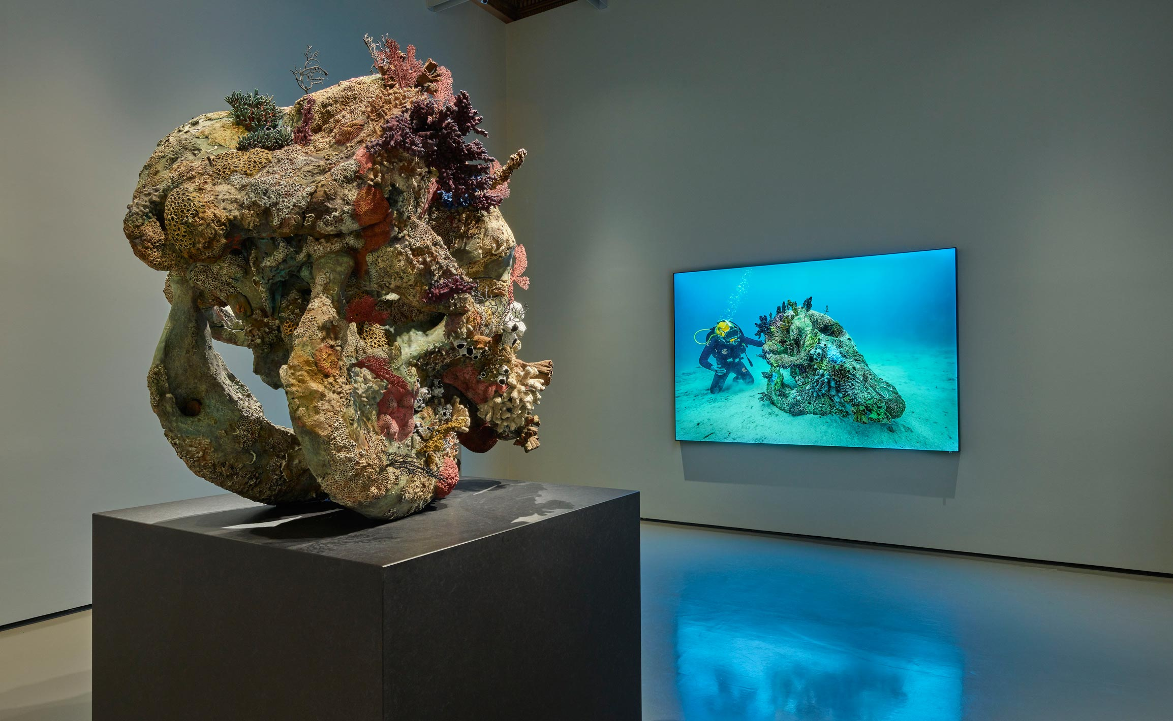 Room 5: (left to right) Damien Hirst, Skull of a Cyclops, Skull of a Cyclops Examined by a Diver (photography Christoph Gerigk). Photographed by Prudence Cuming Associates © Damien Hirst and Science Ltd. All rights reserved, DACS/SIAE 2017