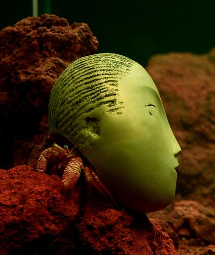 """Détail de l'œuvre """"Zoodram 4"""" (2011) de Pierre Huyghe [écosystème marin vivant, aquarium en verre, système de filtration et coquille en résine d'après """"La Muse endormie"""" de Constantin Brancusi (1910)]. Cette œuvre appartient à la collection Ishikawa, présentée au MOCO jusqu'au 29 septembre."""