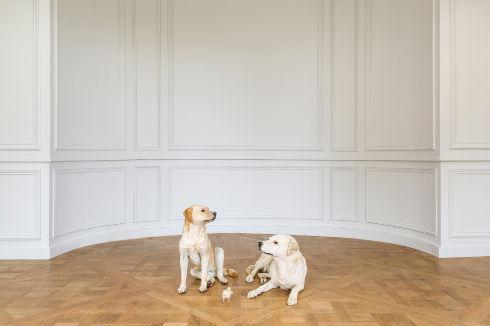Maurizio Cattelan, Sans titre, 2007  Two Labradors and one stuffed chick Photo : Zeno Zotti  View from Maurizio Cattelan exhibition, Not Afraid of Love at Monnaie de Paris, from october 21rst 2016 until January 8th 2017     Violence is another recurring motif. What's your take on violence in our societies? Unfortunately violence is central in everyone's life, we just can't help it. It's all around and inside us. I've heard it said that people sleep peaceably in their beds at night only because rough men stand ready to do violence on their behalf. I'm afraid it's the awful truth, and I wish it wasn't so.   What's the artist's role? To challenge authority and society? To reveal hidden truths? The duty of art is to ask questions, not to provide answers. And if you want a clearer answer, then you're in the wrong place. A book, or a magazine, or a movie, they're like a Rorschach test − what you see is your inner and unsayable ego. They reflect with extreme precision who you are, more than who the artist is.