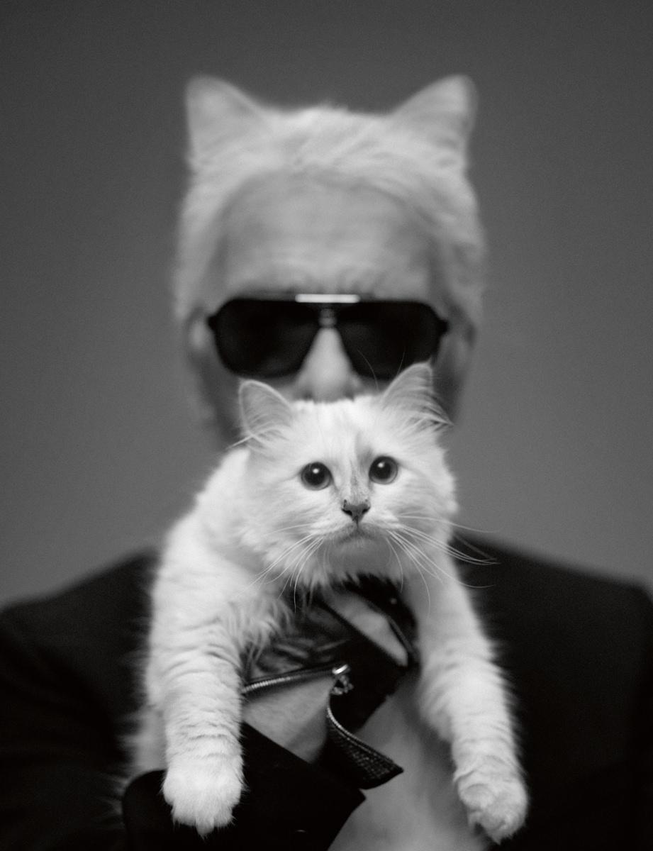 """Autoportrait : Karl Lagerfeld.  Numéro: Quand avez-vous décidé d'acquérir une petite chatte, Karl? Karl Lagerfeld: Mon amour pour les petites boules de poils m'est venu de façon assez tardive. J'avais déjà eu des chiens dans ma vie, mais c'était lorsque j'habitais à la campagne.À Paris, comme dans toutes les grandes villes, c'est toujours un peu compliqué. Comme vous pouvez l'imaginer, je ne peux plus me permettre de promener un chien dans la rue sans que cela frise l'émeute. Et puis un chien, c'est loin d'être propre et impeccable, et, quand il pleut, ça sent le rat crevé. J'avais deux amies qui possédaient un chat, et elles en faisaient toujours des tonnes dans le genre débordement d'affection, à tel point que je trouvais cela franchement ridicule. Eh bien figurez-vous que maintenant je suis bien pire.  Qu'est-ce qui vous a tout de suite plu en elle? J'aime bien être tranquille, et ma chatte m'apporte une présence qui compte mais qui n'encombre pas. Elle est paisible, rigolote, amusante, gracieuse, elle est jolie à regarder et elle a une belle démarche, mais sa principale qualité est qu'elle ne parle pas. Ce fut le coup de foudre. Baptiste [Giabiconi], qui partait en vacances, m'a demandé s'il ne pouvait pas la confier pour cette période à mon personnel de maison. Elle était encore bébé à l'époque, et je l'ai trouvée tellement mignonne que lorsque Baptiste est rentré, je lui ai dit: """"Désolé, je la garde.""""  Aviez-vous des animaux, enfant? Oui, je suis un enfant de la campagne. J'avais un chien que j'adorais, mais il est mort très jeune. Un jour, lorsque j'avais 7 ou 8ans, il a couru vers moi avant de tomber raide à mes pieds. Ce qui m'a vacciné pendant de longues années. Bien plus tard, dans mes diverses maisons de campagne, j'ai eu un teckel qui s'appelait Lobb, et un jack russell qui s'appelait Ashton.  Votre petite chatte est-elle gourmande? Maintenant qu'elle est adulte, elle mange à table avec moi. Elle s'assoit en face de moi et ne mange que ce qu'elle doit m"""