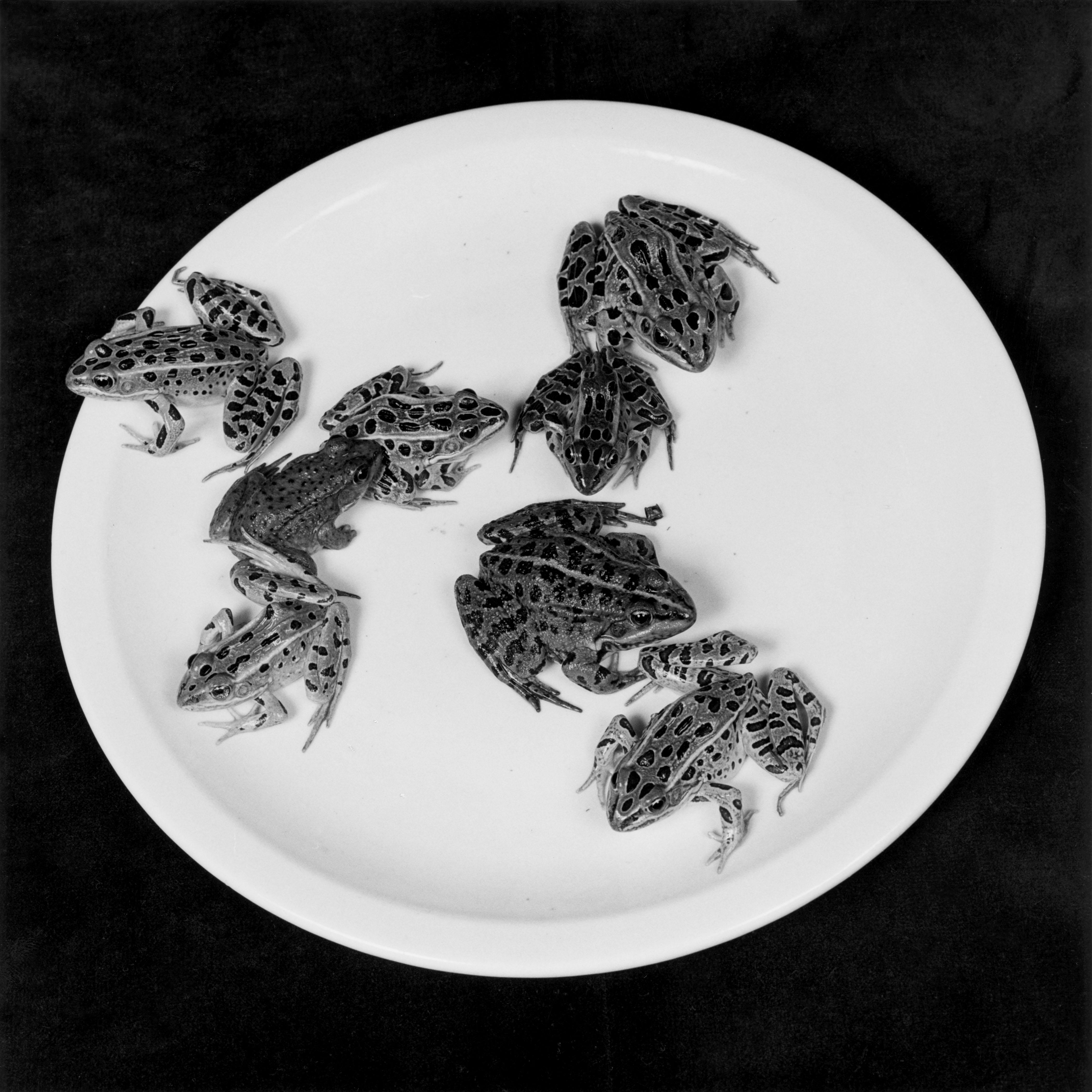 À l'occasion de ce qui aurait été les soixante-dix ans de Robert Mapplethorpe, la galerie londonienne Alison Jacques a demandé à Juergen Teller d'être le conservateur d'un ultime accrochage du travail du maître. L'occasion de se replonger dans ses vastes archives de clichés sulfureux et provocateursen noir et blanc, dont la plupartavaientfait des vagues dans les années 70. Représentation dénudée d'hommes et femmes, autoportraits et portraits troublants d'Andy Warhol ou Debbie Harrie, natures mortes sensuelles,instantanés de sa muse de toujoursPatti Smith.... Emporté par le sida en 1989, il laisse derrière lui une œuvre dont la portée émotionnelle continue d'inspirer une génération entière.  Juergen Teller est d'ailleurs typiquement associé à cette relève, notamment dans sa manière de représenter les femmes. Kate Moss, Marion Cotillard, Björk... Toutes sont passées devant l'objectif de son Contax C2. Difficile d'oublier ses séries devenues cultes dans les pages dumagazineThe Face, ou même sescampagnes au style racé pour notamment Marc Jacobs et Céline. Dans le cadre de l'exposition, il livre une sublime sélection de clichés intimistes, tantôt charnels, tantôt drôles et toujours saisissants de beauté.  Teller on Mapplethorpe à laAlison Jacques Gallery, du 18 novembre au 7 janvier.www.alisonjacquesgallery.com