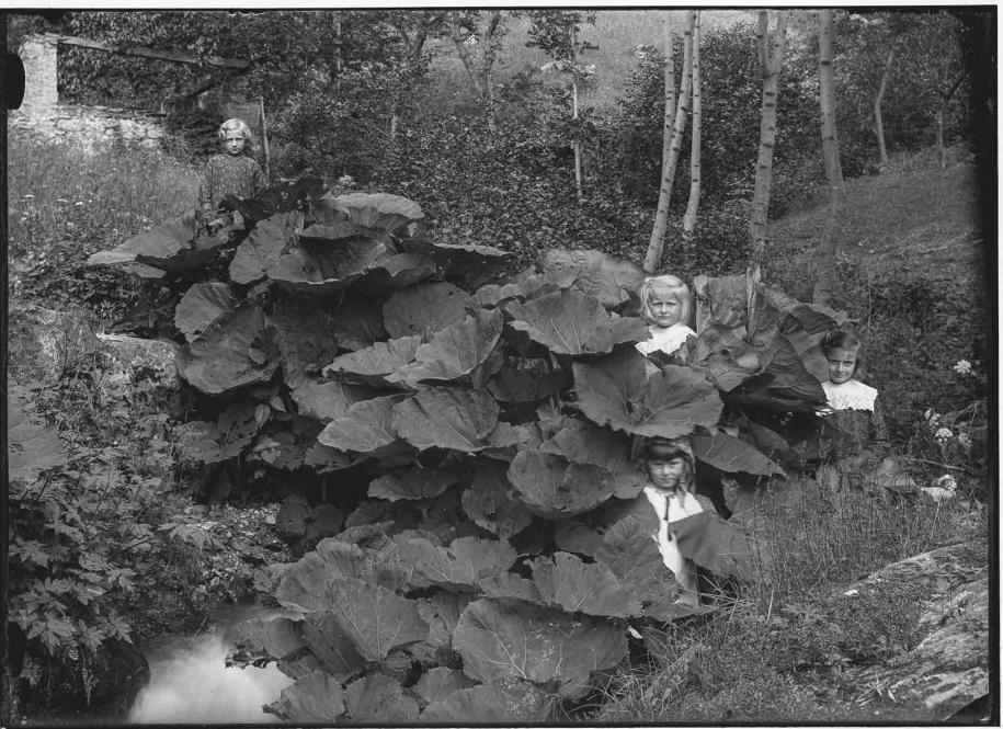 Roberto Donetta Quatre fillettes au milieu des plantes 1900-1932/1993 Tirage argentique sur papier baryté, virage au sulfure de sodium Photo 30 × 40 cm Musée d'art de la Suisse italienne, Lugano. Collection du Tessin