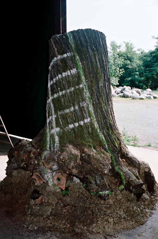 La base d'un arbre prête à être moulée pour les besoins d'une nouvelle œuvre.