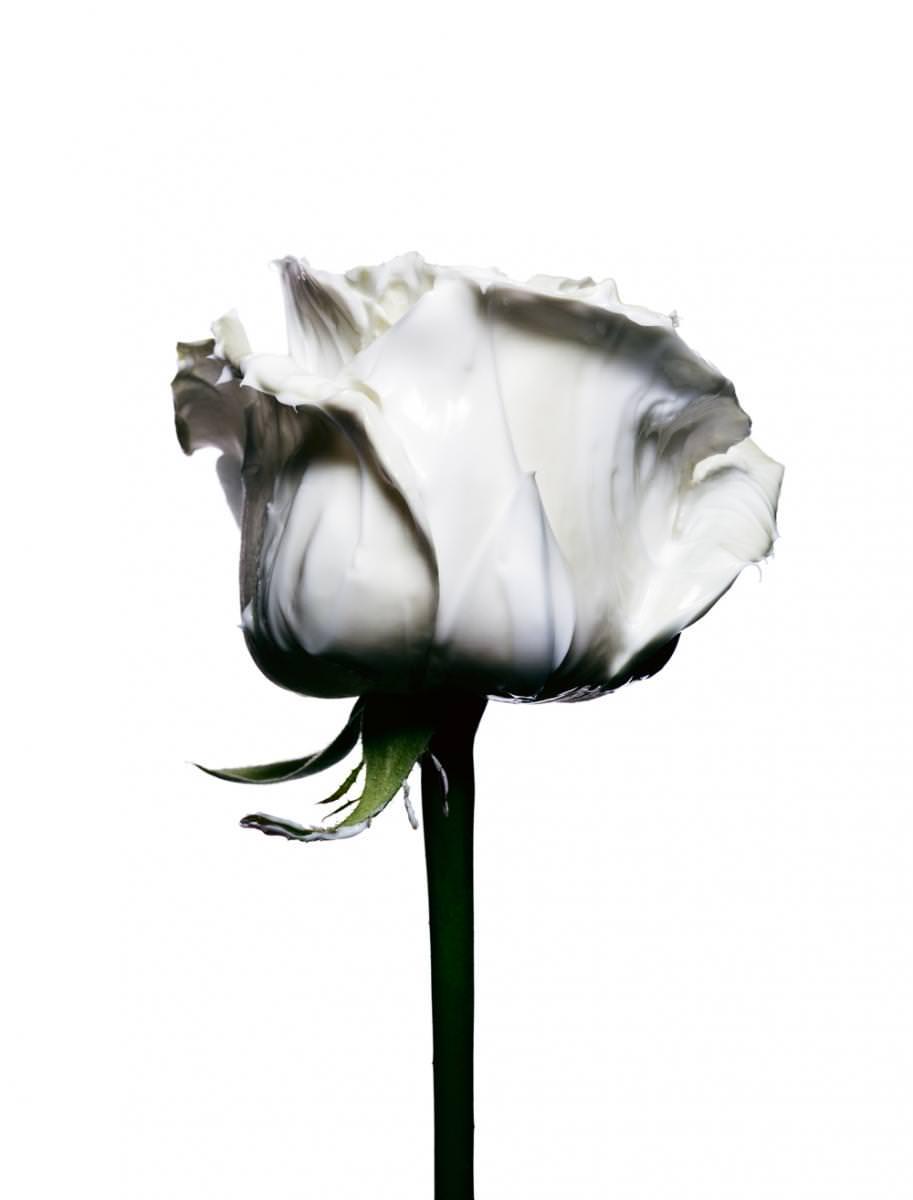 """""""Clarifying Surge, Crème Clarté Lumière"""", VALMONT.  Styliste florale : Amy Humphreys. Traitement de l'image : Marie Zacchi.    →Abonnez-vous au magazine Numéro →Abonnez-vous à l'application iPad Numéro"""