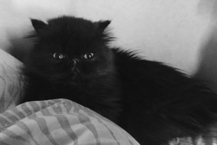 Dimanche soir :Rien de plus réconfortant que le poil soyeuxde mon chat Arturo.     www.magdalenafrackowiak.com