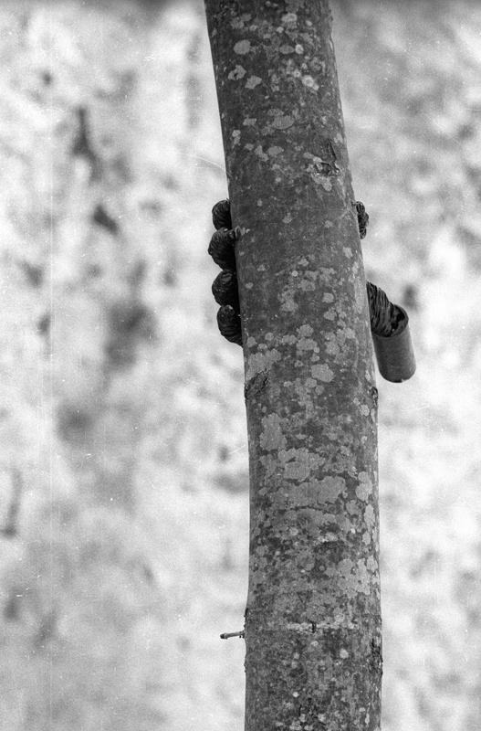 Documentation de l'action de l'artiste. Photo © Archivio Penone