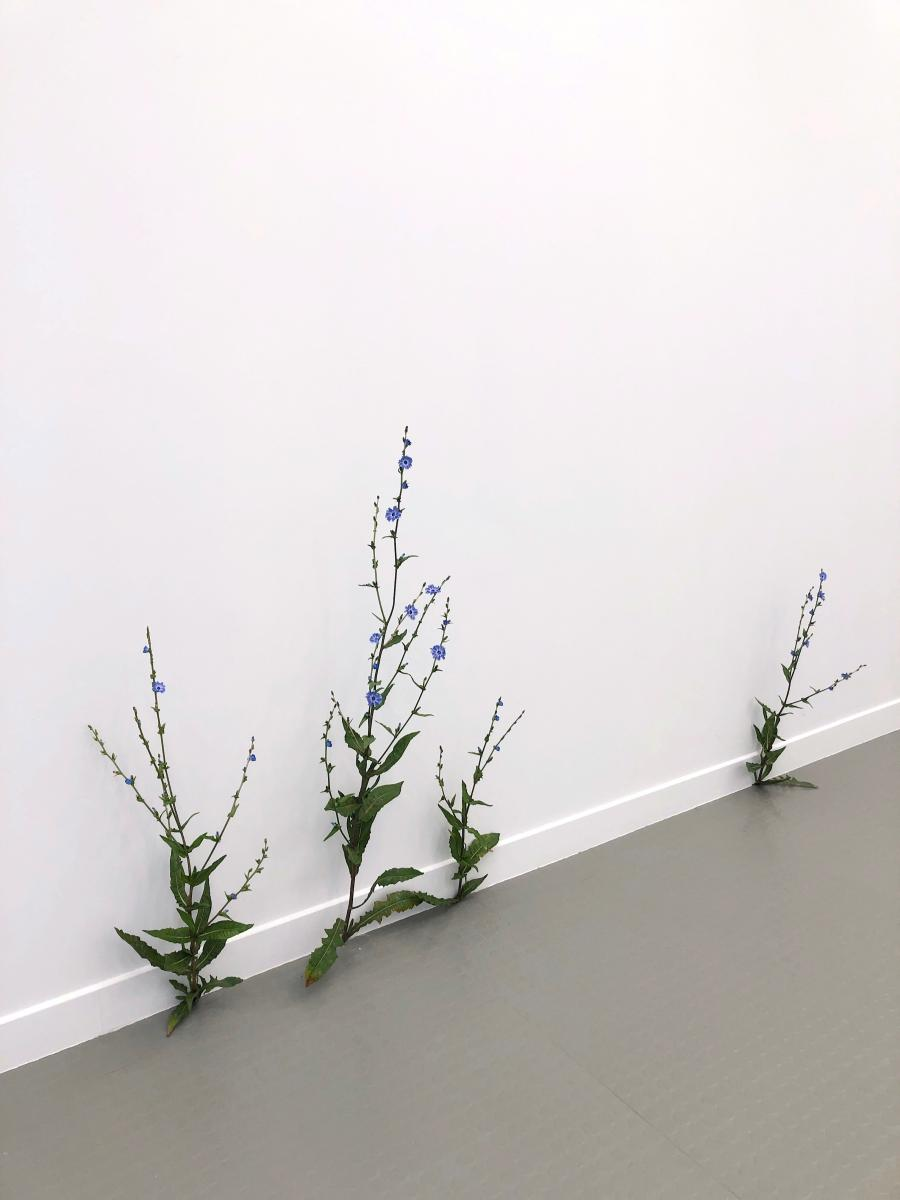 Tony Matelli,Weeds (2020). Painted bronze,71.1 x 25.4 x 30.5 cm.Courtesy the artist and Andréhn-Schiptjenko, Stockholm/Paris.