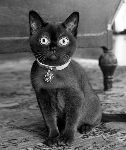 Talisman Bell, la collection Givenchy de bijoux pour chats (mais pas que...)