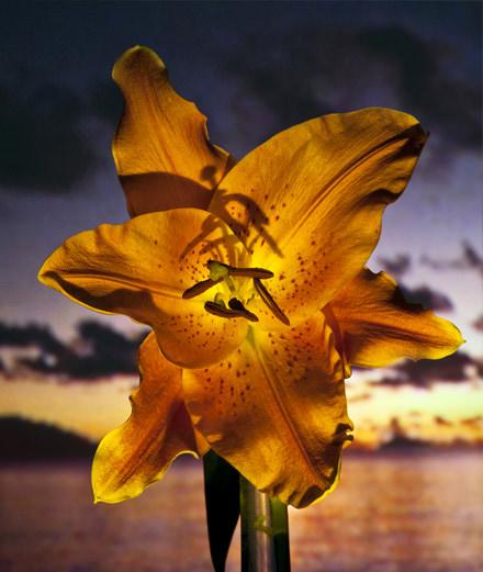 "Gian Paolo Barbieri raconte son amour perdu dans ""Flowers of My life"""