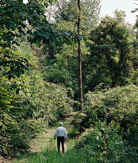 Giuseppe Penone's forest