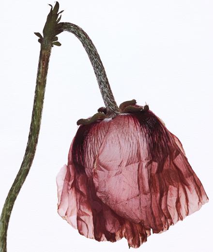 Mégots écrasés et fleurs fanées, les natures mortes d'Irving Penn chez Ropac