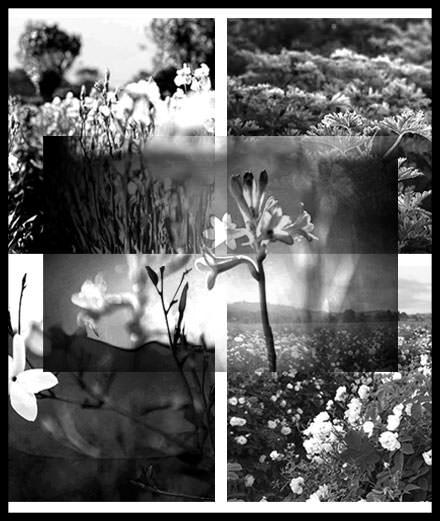 En plein Paris, le champ de plantes à parfums de Chanel