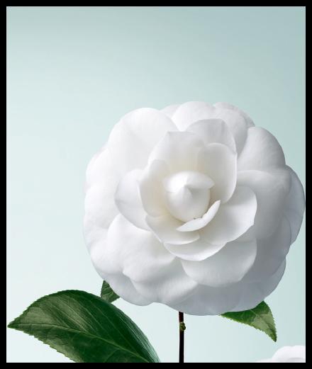 Nouvelles dates : Chanel cultive la Beauté au Jardin des Plantes, à Paris