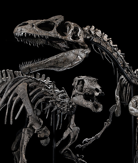 Bataille de dinosaures chez Artcurial